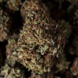 Light Mary CBD hemp strain