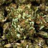 Nuovi fiori di cannabis 2019 Alto contenuto CBD