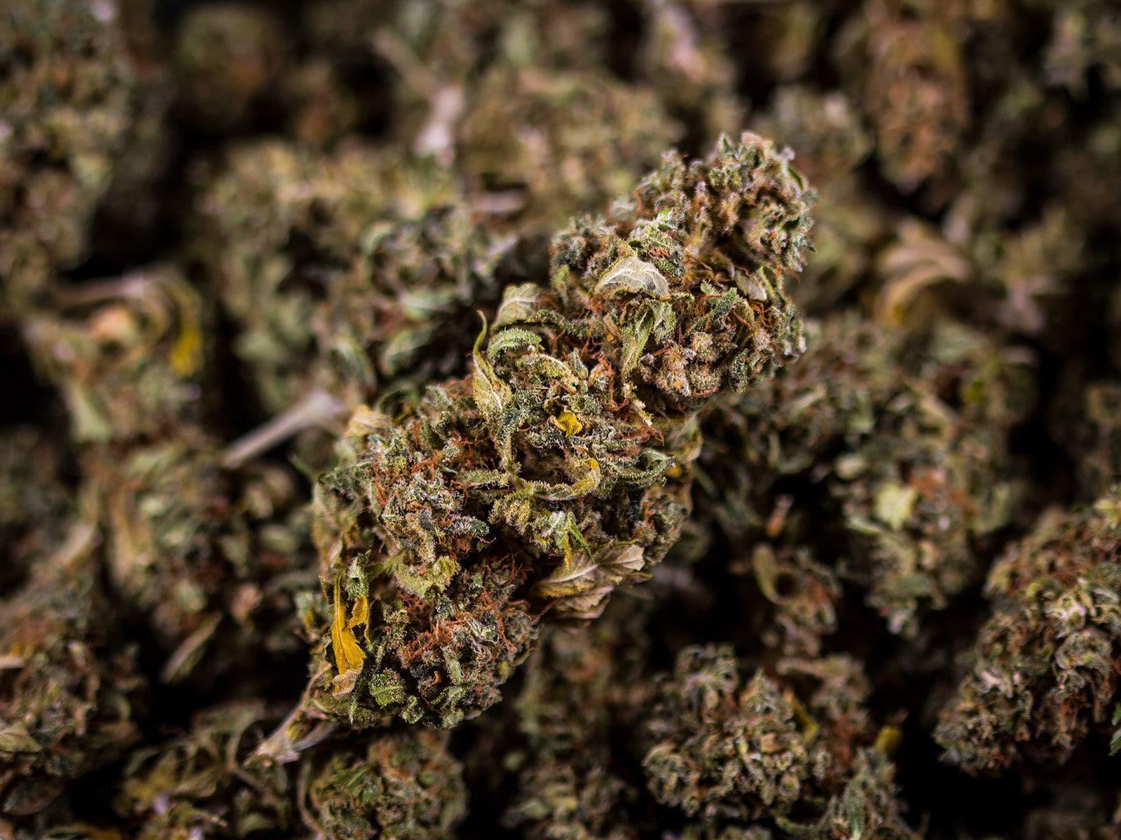 best cannabis light les fleurs du bien cbd 11 ladymary. Black Bedroom Furniture Sets. Home Design Ideas