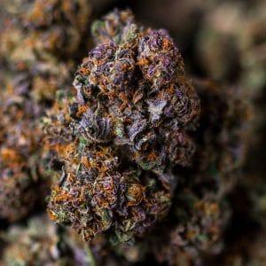 cannabis qualità svizzera