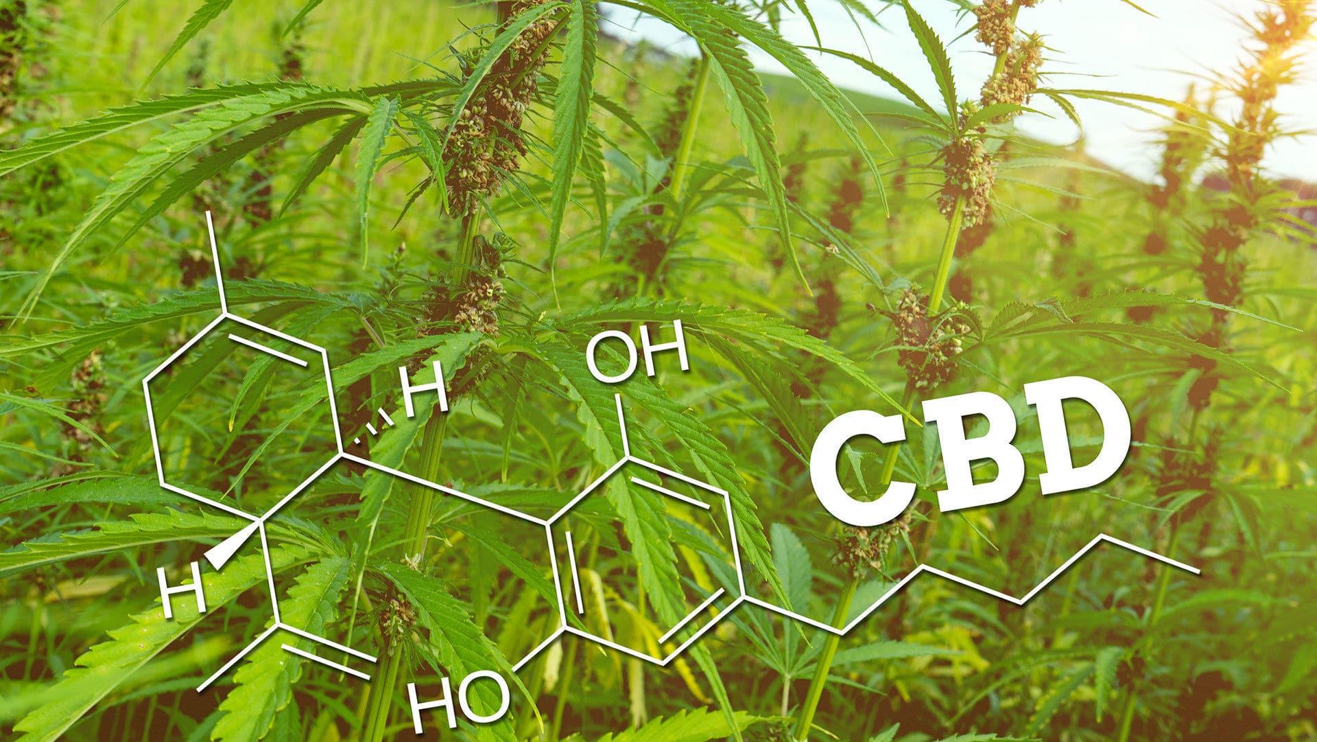 cbd proprietà ed effetti