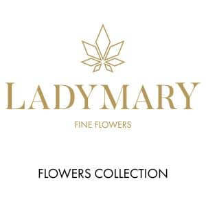 flower collection collezione di cannabis legale