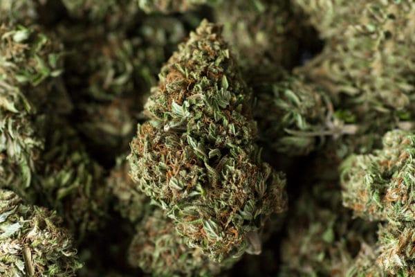 Royal Blue: fiore di cannabis legale premium
